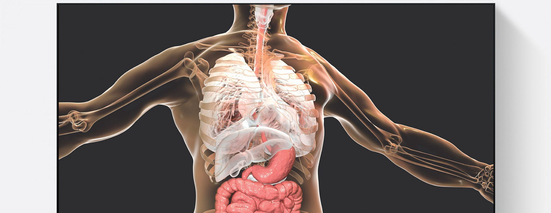 Major Systems In The Human Body Advanced Course